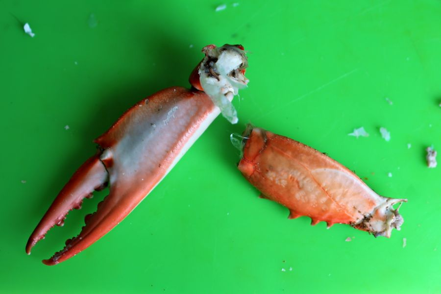 Cleaning Crab Claws: Step-by-Step. Getting disjointed, part 1.