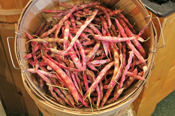 Scenes From a North Coast Grocery: Cranberry Beans