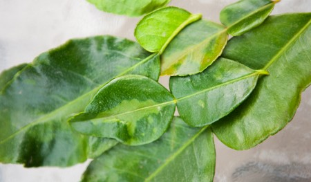 Kaffir Lime Leaves: Where Have You Been All My Life?