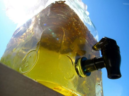 Nature's Brew: Thoughts on Making Safe Sun Tea