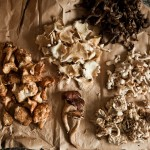 Magical Mystery of Wild Mushrooms